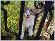 Ορφανό γατάκι...