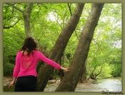 Στο δάσος