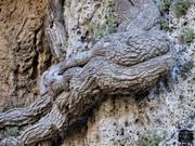 Ο φύλακας των βράχων