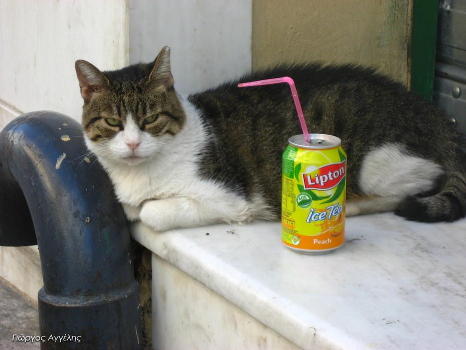 LIPTON… CAT