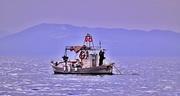 Καλημέρα και καλά ψαρέματα....!