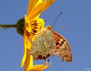 Το φιλί της πεταλούδας