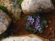 Πέτρα και άνθος(1)