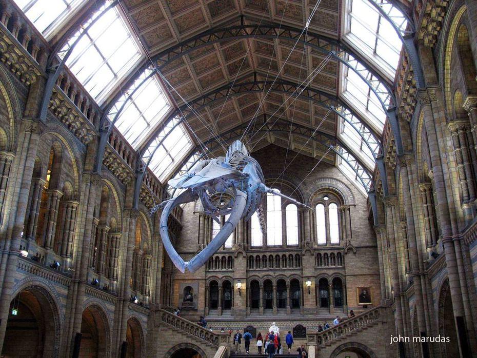 256. 2017 NATURAL HISTORY MUSEUM, LONDON