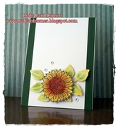 Any occasion Sunflower