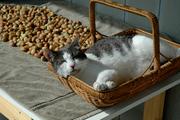 Hazelnuts and Millie