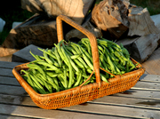 Bush Beans...time to make Plig King!