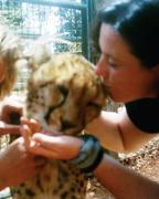 In kenya falling in love with a Cheeta