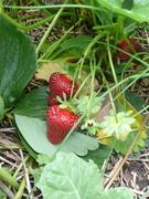 2009 garden
