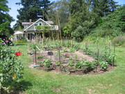 the garden in early summer 2010