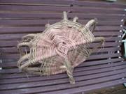 Invasive Plants Basketry Workshop