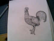 rooster i drew ready!!