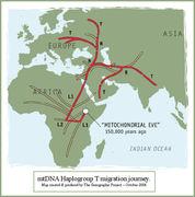 T Migration Map