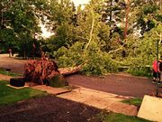 East Ridley Avenue trees down