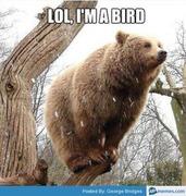 LOL, I'M A BIRD