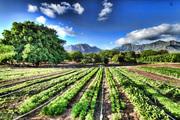 organicfarm2