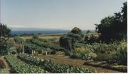 organicfarm5