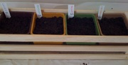 Windowsill Gardening - Four Herb Pots
