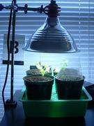 My Home-Grown Salad Bar
