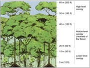 rainforest.structure.diagram