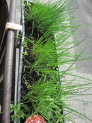 my herbes on my balcony