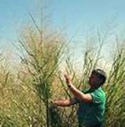 Go Biomass (utilize more efficent sources like switchgrass and algae)