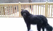 Timmy loving the snow 2
