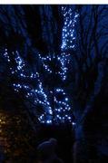 Myddleton Road Lantern Parade 30.11.14