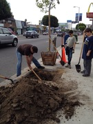 Plant Pico Day in Rancho Park - Digging It