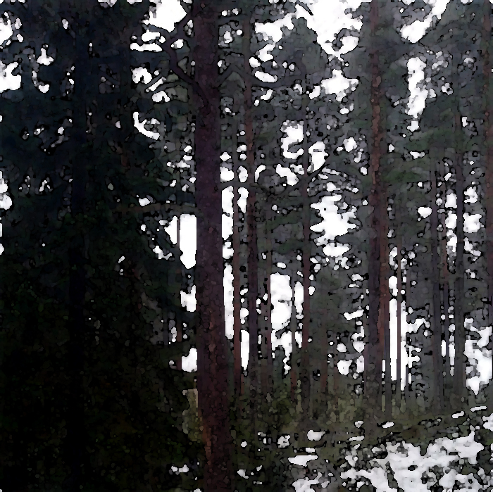 Tall Trees And Snow