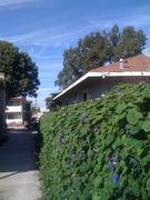 Mike's backyard in San Pedro