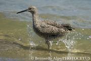 Cabrillo Beach Birds