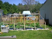 Spring 2012 King and Greenhouse 035
