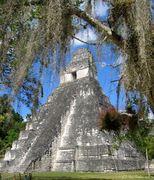 Maya Life