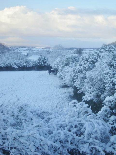 Snowy Northumberland Scene
