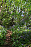 Blue Bell path