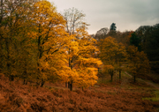 Lake District Trees