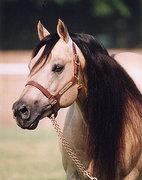 Quarter Horse Lovers