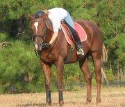 North Carolina Equestrians