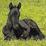 Quality Horse Breeders