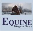 Equine Niagara News