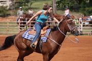 Barrel Horse Beauties