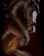 Horse Light