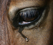 horse racing - the glits, the glamour... the grim reality
