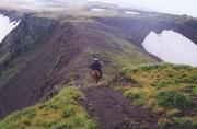 Backcountry Horsemen