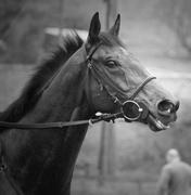 Ontario Horse Racing