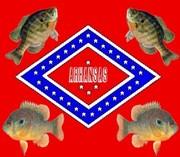 Arkansasfishers