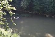 Creek Fishing for Panfish