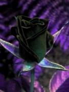K&K Magickal Book {Grimi…
