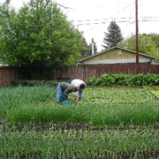 S P I N farming